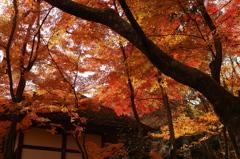 燃えるような思い(京都の秋)