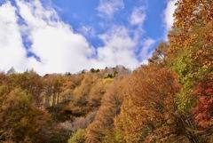 秋色に浸る