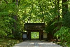 山寺の新緑