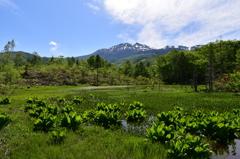 乗鞍岳をどじょう池より望む