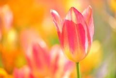 お花の時間