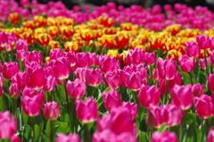 きっとこんな色の春が来る1