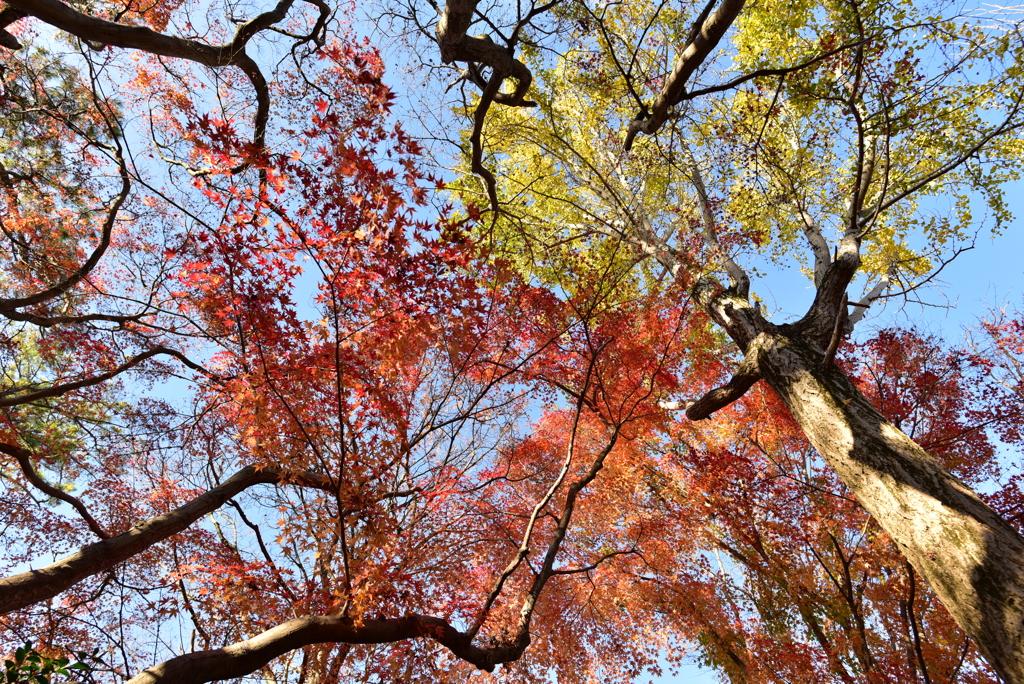 秋の造形美