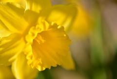 春への導光