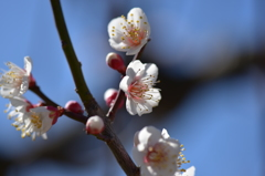 柔らかな春の光