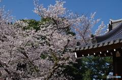 きっとまた行けるね! 京都2