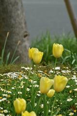 春のやさしさ