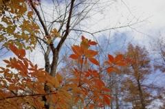 つれない秋の空と紅葉