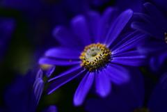 紫色に惹かれて