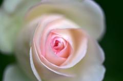信州にバラを求めて5