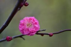 新春の彩り