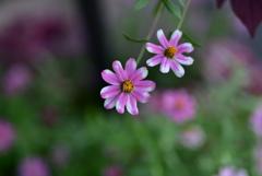 絵の具で描かれたお花たち