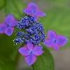 青とピンクと紫