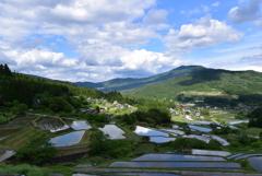 青空と水田
