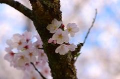 春の優しさ