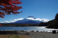 富士山と宙に舞った黄色いモミジ