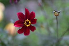 安曇野のお花達2