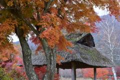 秋の野鳥の森公園