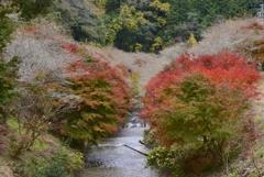 四季桜の里へようこそ