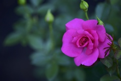 Impressive Pink