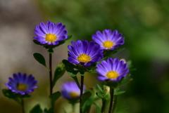 安曇野のお花たち1