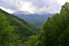 新樹の白樺峠