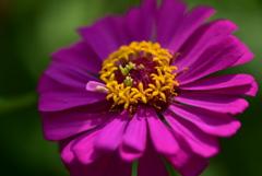 安曇野のお花たち3