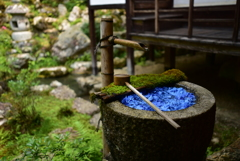 紫陽花の花手水