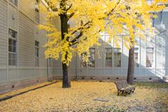 銀杏と学校とベンチ