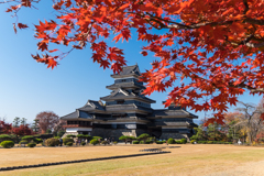 松本城 紅葉
