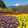 春の安曇野公園