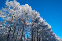 青空に樹氷