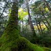 秋深まる苔の森