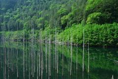 緑あふれる湖