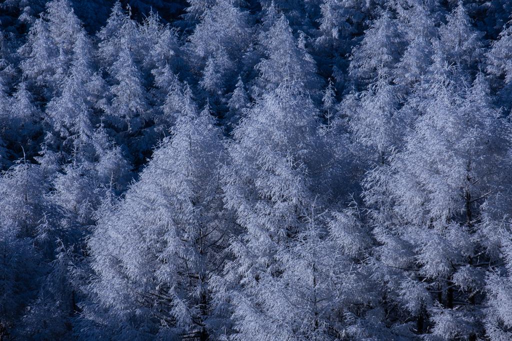 樹氷~光を浴びて~