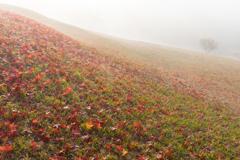 この広い丘秋色いっぱい
