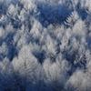 樹氷〜朝日を浴びて〜