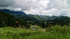 カンゾウの咲く山里