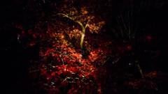 浮かびあがる秋