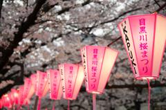 目黒川桜まつり ちょうちん