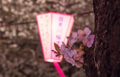 今年はどんな桜撮れるかな