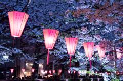 2017 目黒川桜まつり