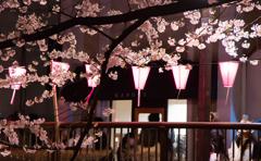 目黒川桜まつり2016