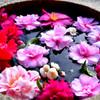 手水鉢と冬の花たち