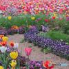 花のオアシス
