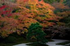 緑松と紅葉