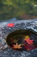 石椀の中の秋