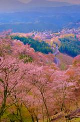 春の吉野、桜の世界