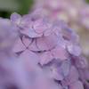 梅雨を彩る花