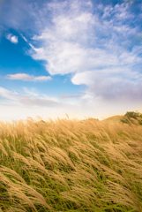 秋の丘、乾いた風